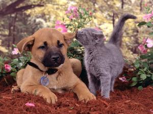 Aplicable en Perros y gatos